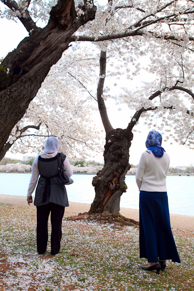 Two women pause behind an aged cherry tree at the Tidal Basin.